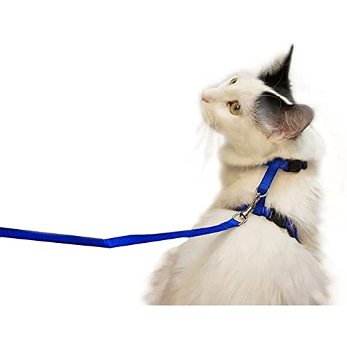 Adjustable Nylon Pet Harness Collar and Leash for Cats and Small Dogs, Navy Blue